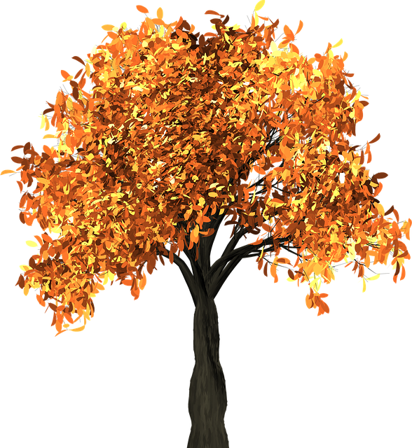 tree leaves autumn fall branches isolated nature