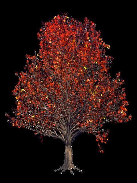 Leaf, Nature, Tree, Season, Fall, Orange, Leaves