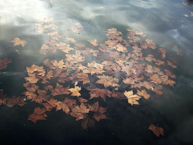 Water, Pond, Leaves, Autumn, Reflections, Nature
