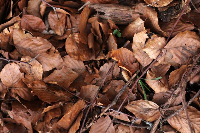 Leaves, The Bodice, Nature, Autumn, Tree, Leaf, Green