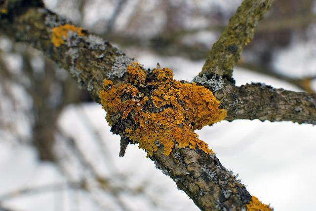 Branch, Lichen, Nature, Tree, Wood, Outdoors