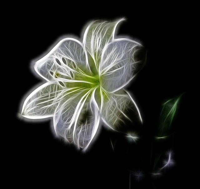 White, Lily, Flower, Nature, Beauty, Digital Art