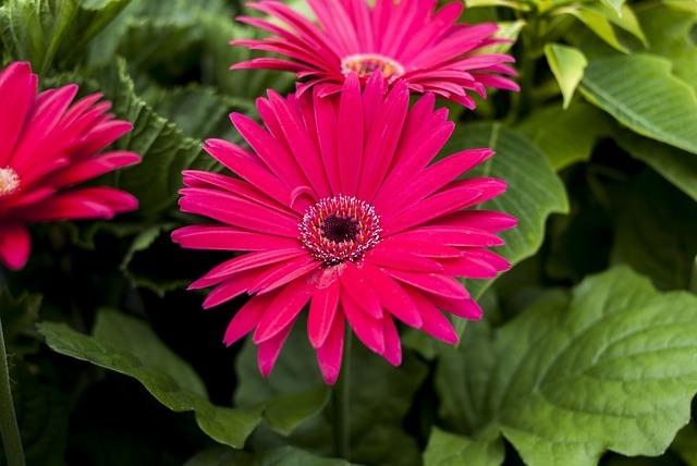 Linda Flower, Nature, Flower, Plant, Summer