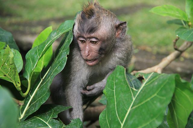 Nature, Sheet, Little, Monkey, Young, Wild, No One