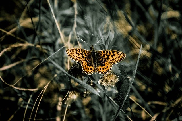Butterfly, Nature, Living Nature