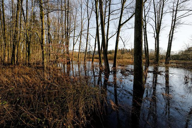 Oste, Low Stuff, Flood, River, Nature, Tree, Waters