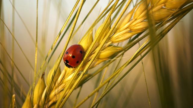 Ladybug, Beetle, Insect, Nature, Lucky Charm, Luck