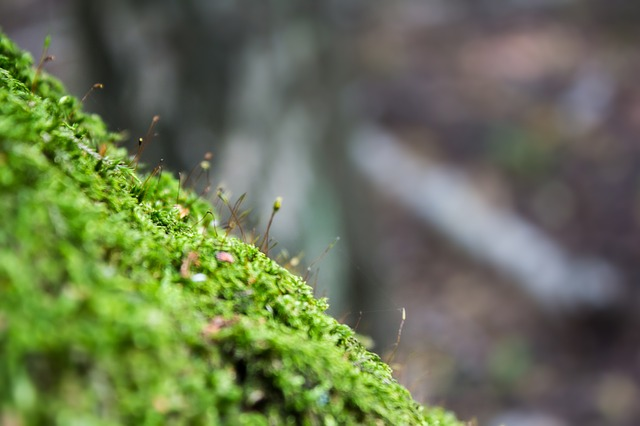 Moss, Forest, Macro, Nature