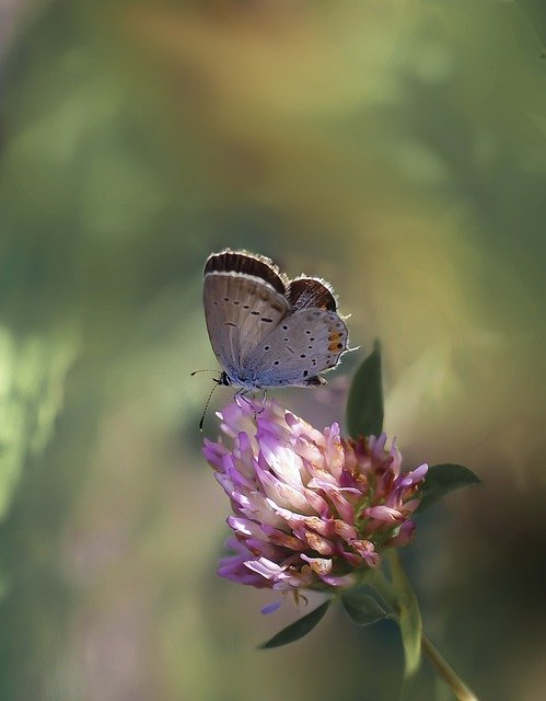 Butterfly, Butterflies, Nature, Insect, Macro, Wing
