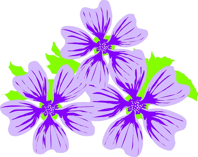 Flower, Malva, Plant, Nature
