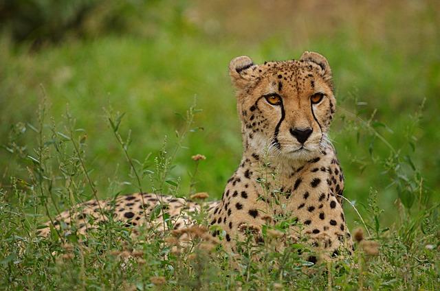 Animal World, Nature, Mammal, Carnivores, Animal
