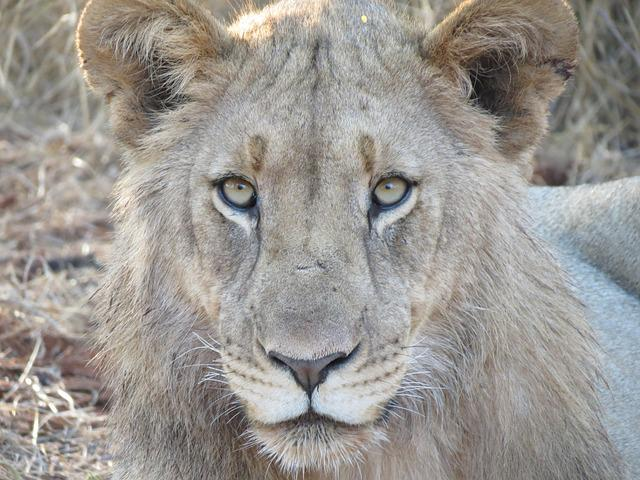 Wildlife, Animal, Carnivore, Mammal, Nature
