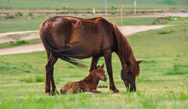 Horse, Mare, Foal, Nature, Mammal, Equine, Animal