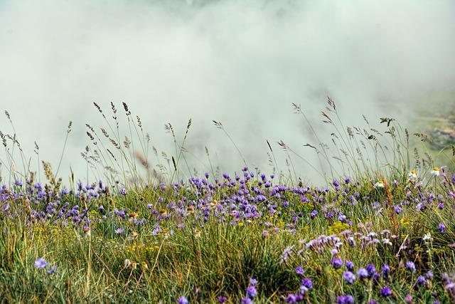 Nature, Flowers, Meadow, Summer, Purple, Plants