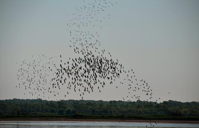 Birds, Nature, Migration