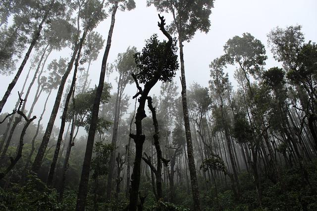 Fog, Forest, Mist, Nature, Outdoors, Rainforest, Scenic