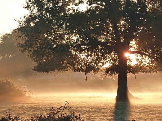 Fall, Mist, Sun, Morning, Nature, Tree