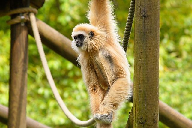 Monkey, Enclosure, Open, Nature, Animal World, Zoo