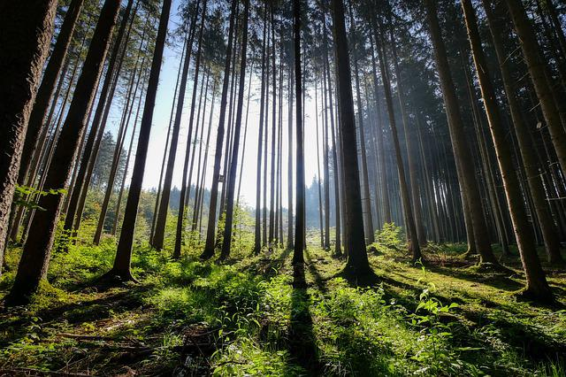 Forest, Shadow, Nature, Trees, Light, Mood, Green