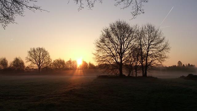 Sunrise, Trees, Morning, Morgenstimmung, Nature