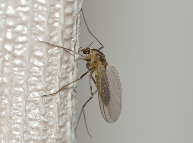 Nature, Insects, Mosquito