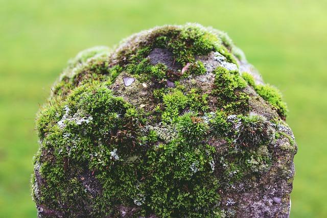 Mast, Stone, Moss, Post, Fence, Green, Garden, Nature