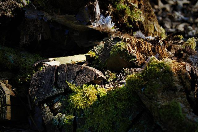 Wood, Moss, Old, Rot, Nature, Tree, Green, Log