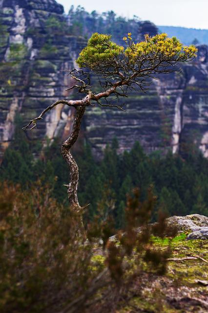 Tree, Mountain, Landscape, Nature, Rock, Mountain Range
