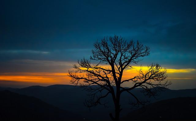 Tree, Mountain, Sky, Nature, Sunset, Travel, Forest