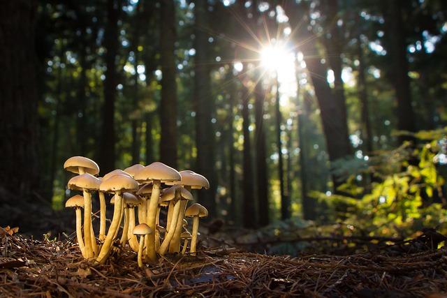 Mushroom, Mushrooms, Forest, Nature, Fungus, Autumn