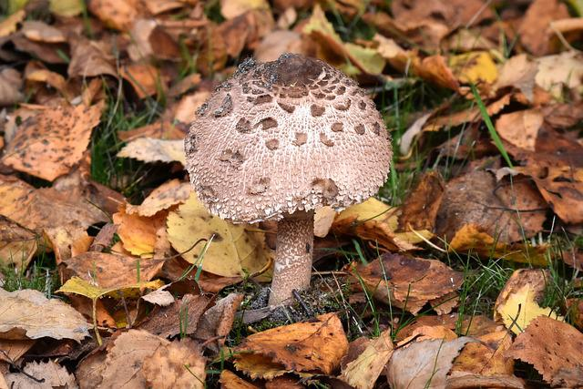 Mushroom, Agaric, Nature, Autumn, Mushrooms