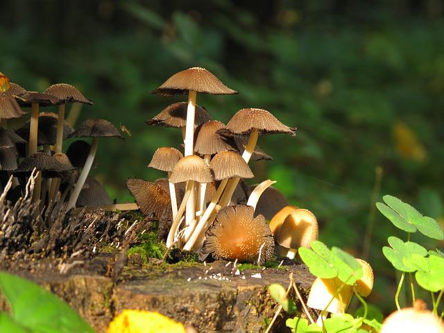 Mushrooms, Forest, Konar, Trunk, Nature