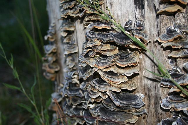 Mushrooms, Turkey Tail, Nature, Fungus, Versicolor