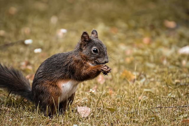 Squirrel, Nager, Animal, Cute, Nature, Rodent