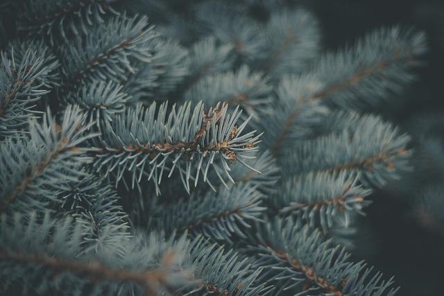 Pine, Needles, Macro, Detail, Branch, Tree, Nature