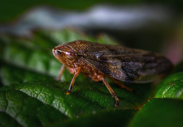 Insect, Nature, Bespozvonochnoe, No One, Living Nature