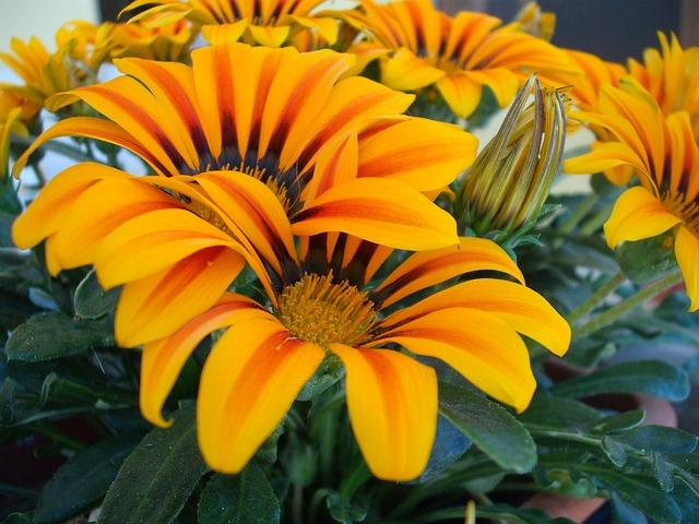 Flower, Garden, Nature, Orange, Colors, Flowers