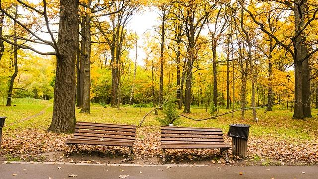 Nature, Autumn, Leaves, Fall, Yellow, Leaf, Orange