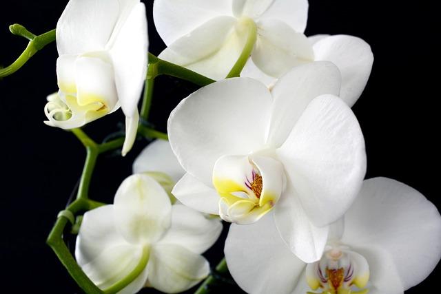 Orchid, Flower, Plant, Nature, Tropical, Petal