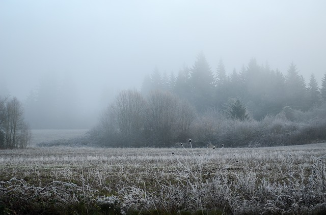 Oregon, Snow, Frost, Field, Fog, Nature, Winter, Season