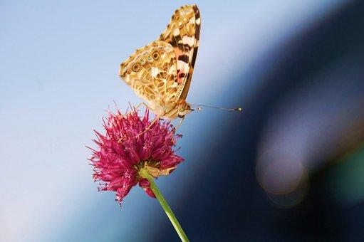 Nature, Summer, Plant, Butterflies, Outdoor