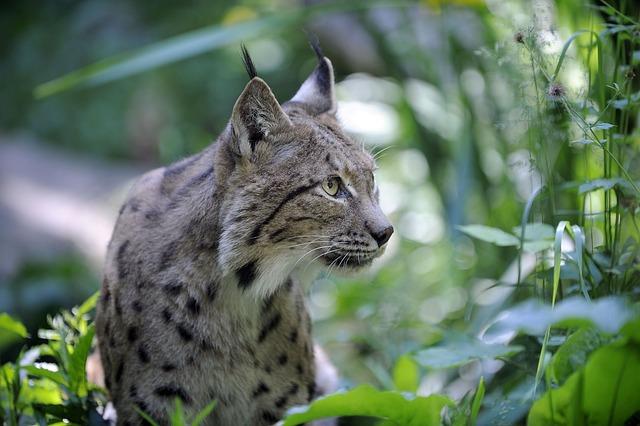 Nature, Fauna, Animal, Outdoor