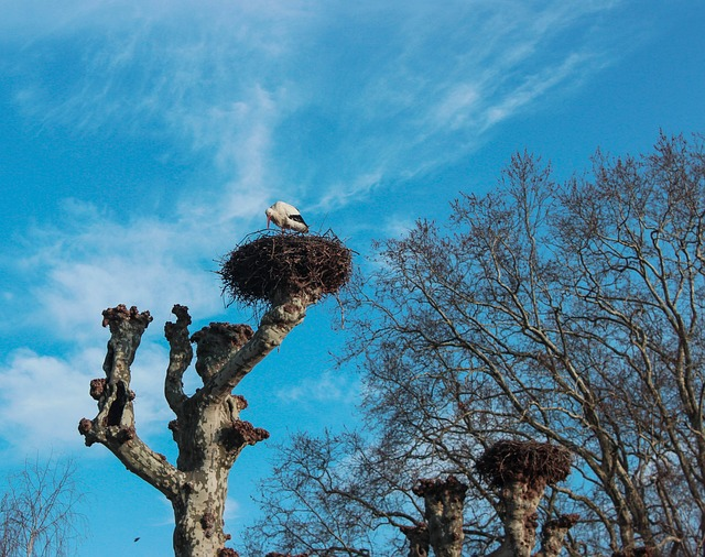Tree, Sky, Outdoor, Nature, Branch, Stork, Strasbourg