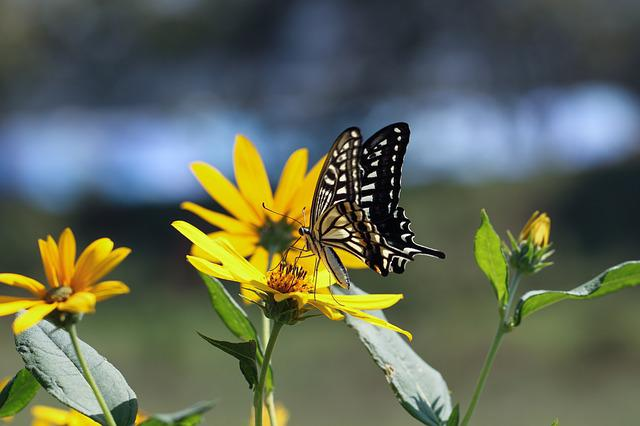 Nature, Outdoors, Insects, Butterfly, Summer