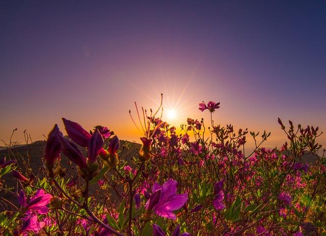 Nature, Summer, S, Heaven, Outdoors, Sea, Plants