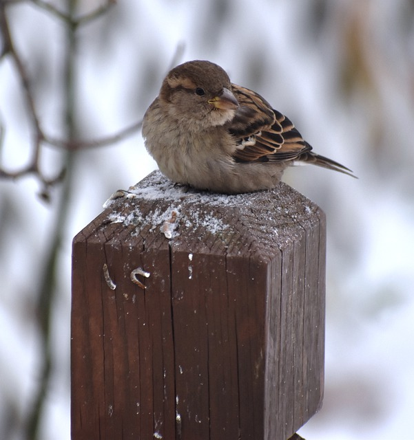 Bird, Wildlife, Nature, Outdoors, Sparrow