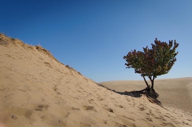 Desert, Sand, Nature, Travel, Outdoors, Michigan, Tree