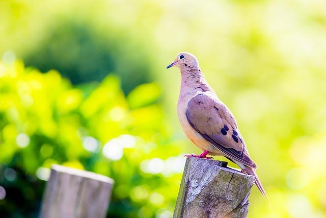 Nature, Outdoors, Bird, Summer, Little, Wildlife