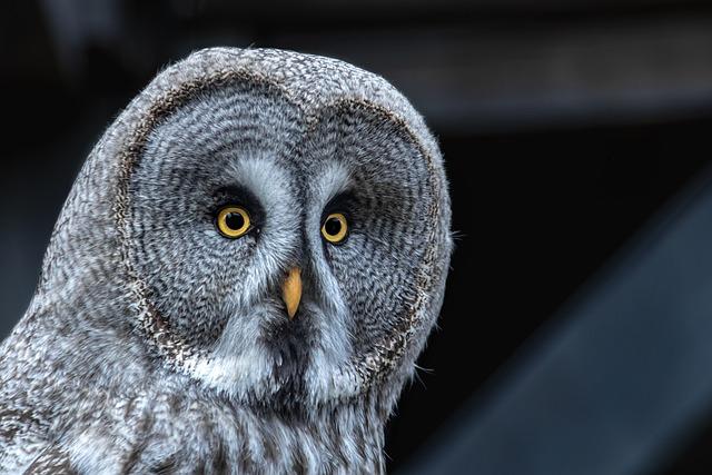 Donations Keeps Me Going, Owl, Bird, Animal, Nature