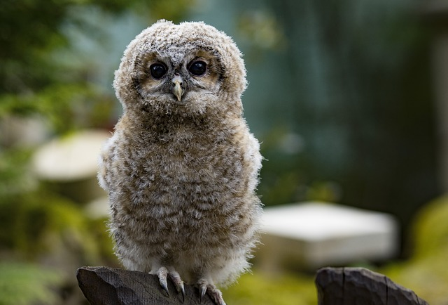 Owl, Eagle Owl, Bird, Bird Of Prey, Feather, Nature